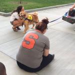 college_pet_therapy_retriever_hug