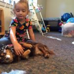 pet-therapy-skaneateles-dachshund-belly-rub