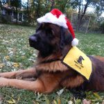 Chase Holiday Pet Partner Therapy Dog