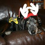 Pet Therapy Syracuse