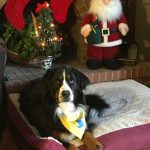 Syracuse Therapy Pet Program