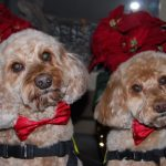 Therapy Dog Pet Partners