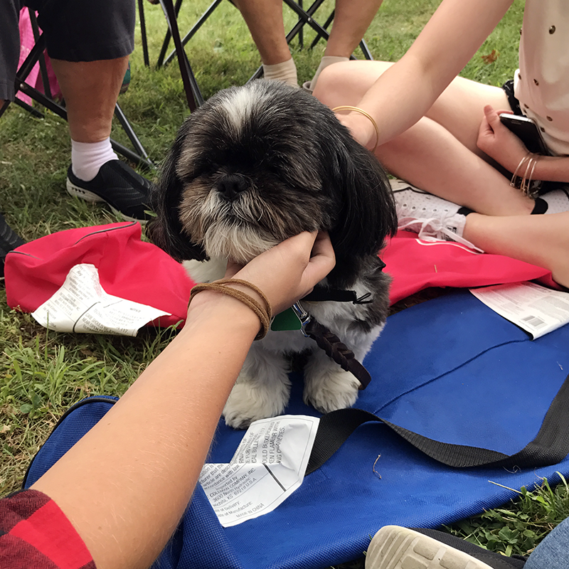 SUNY Oswego Pet Therapy at Penfield Library with Sammy