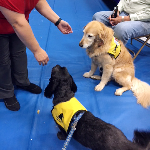 Elmcrest_Wellness_Fair_2017_Pet_Elmcrest_Wellness_Fair_2017_Pet_Therapy_Sparky_Molly_and_FriendTherapy_Sparky_Molly