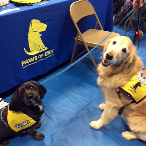 Elmcrest_Wellness_Fair_2017_Pet_Therapy_Sparky_and_Molly