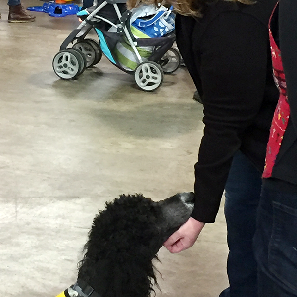Pet-Therapy Teams at Syracuse Kids Expo - Yuki