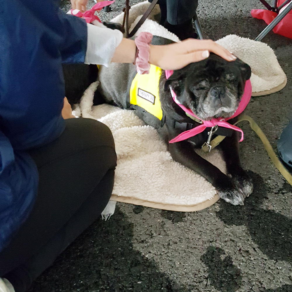 Syracuse Komen Race for the Cure Pet Therapy