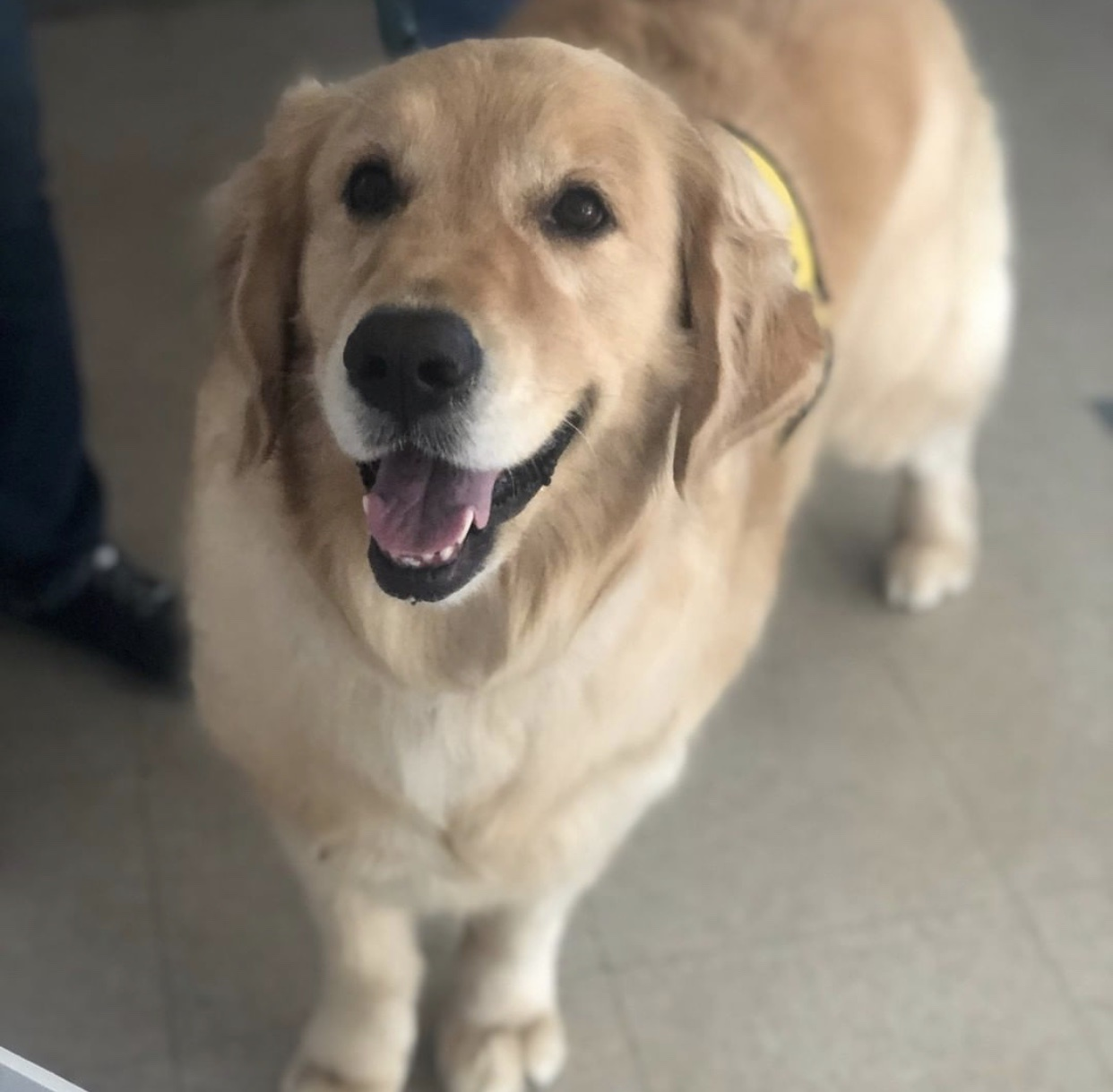 Retired Therapy Dog Brody