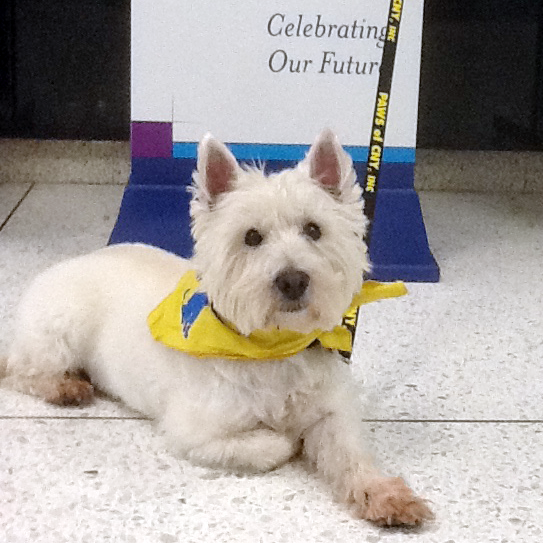 Retired Therapy Dog Duffy