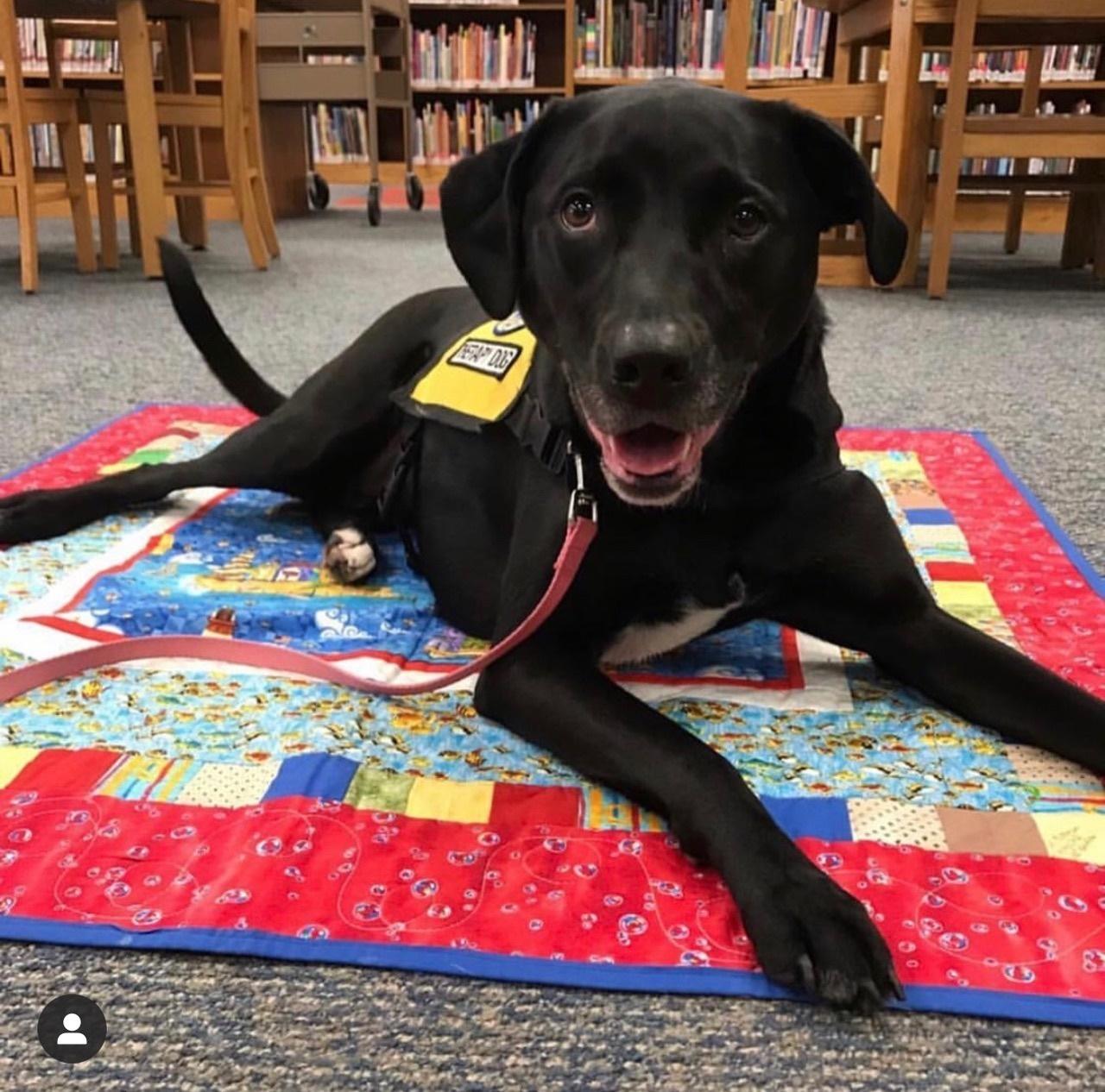 Retired Therapy Dog Poppy