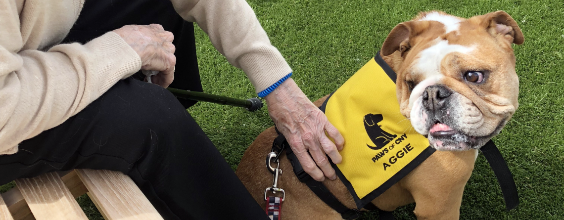 Therapy Dog Training Class Registrations Now Open