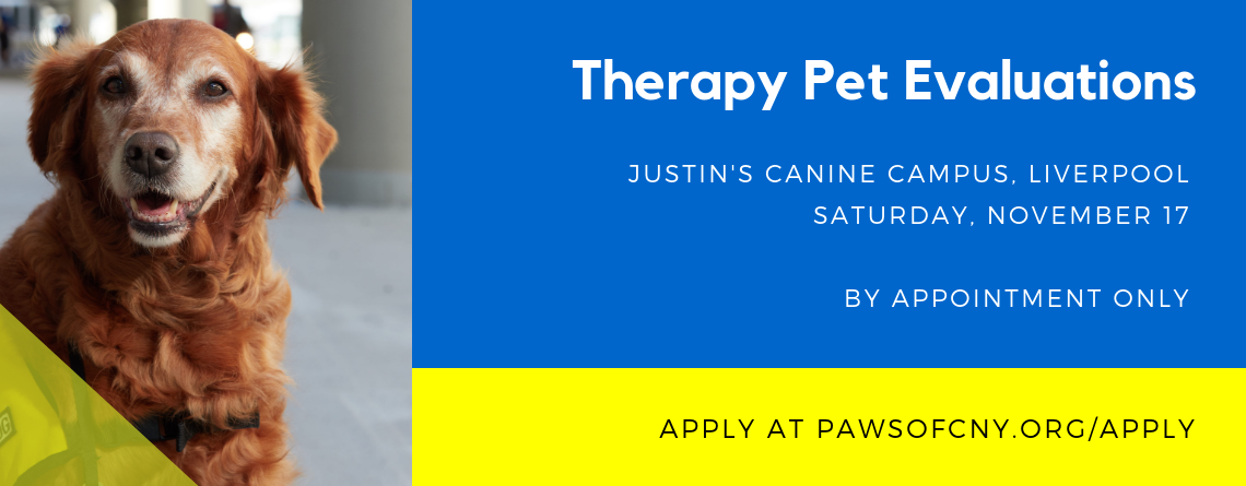 Therapy Pet Evaluations, Liverpool, November 17