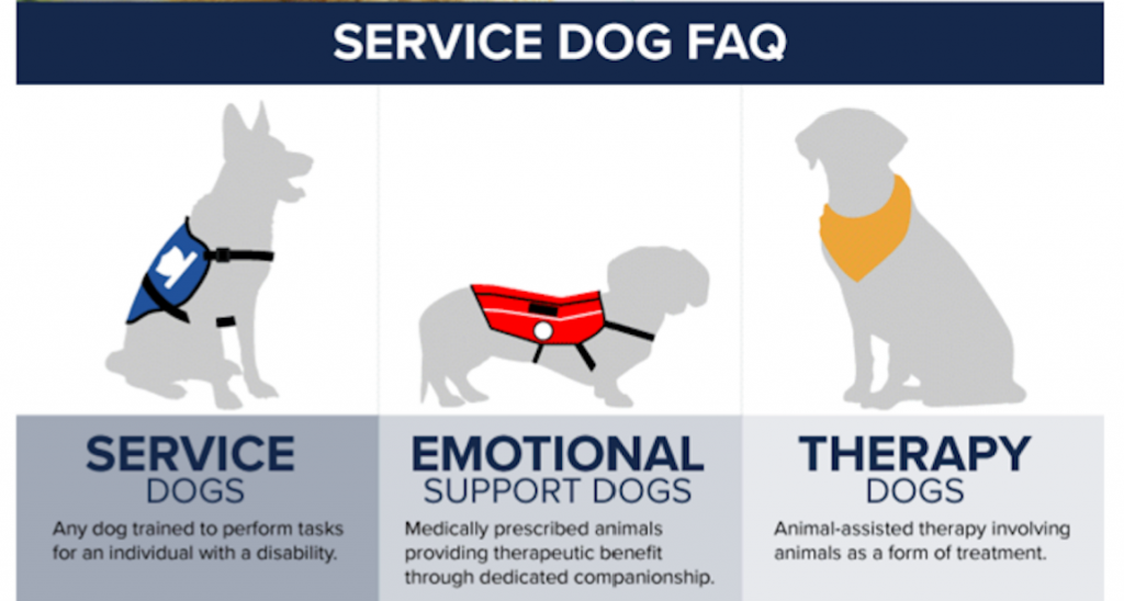 Why You Shouldnt Certify Your Pet For Therapy Work