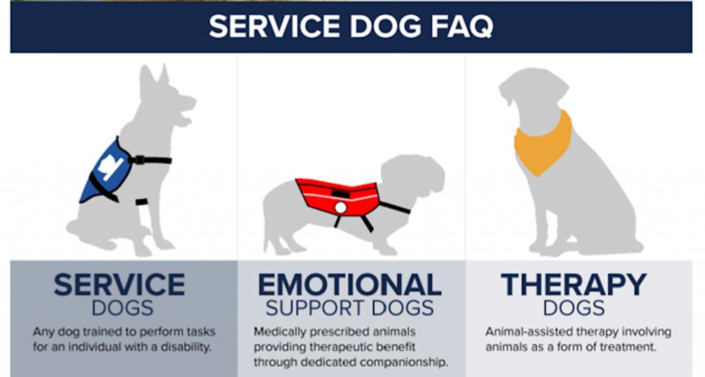 Service_v_Support_v_Therapy_Dog