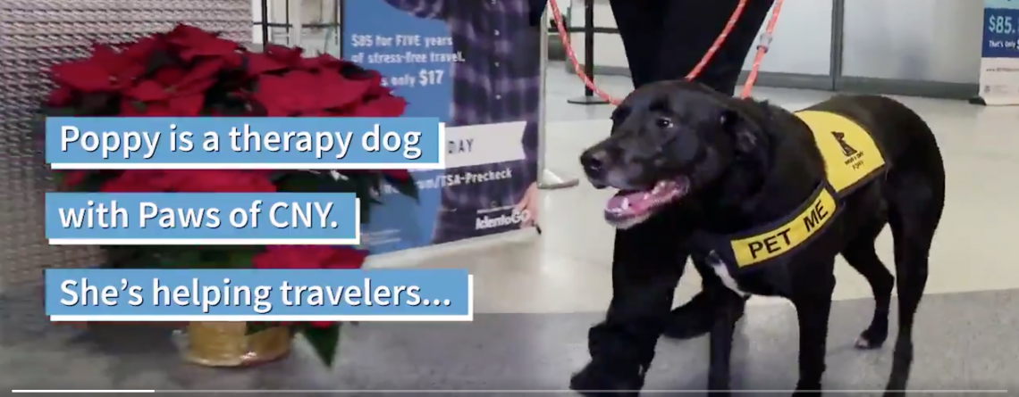 PAWS of CNY De-Stresses Holiday Travelers at Syracuse Airport