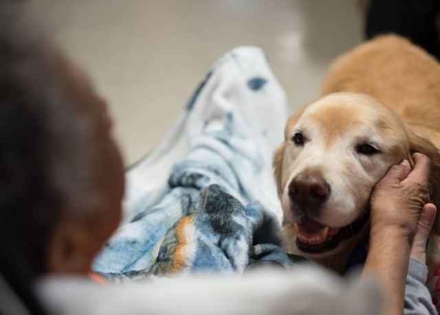 Central New York Pet Therapy