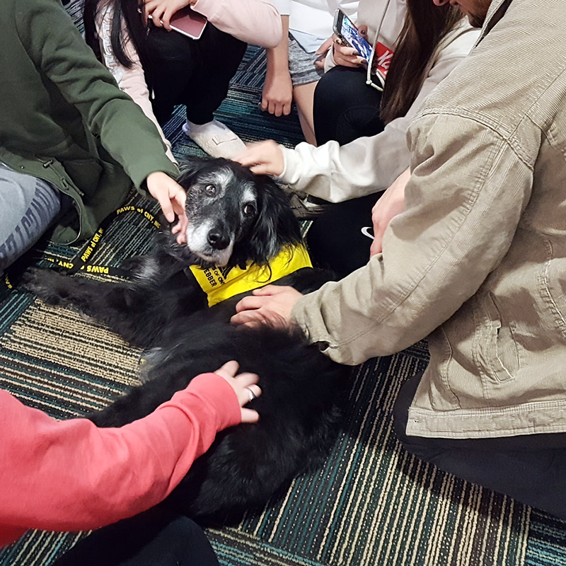 College Pet Therapy Central New York